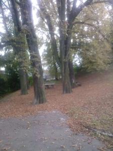 Frühes Herbstlaub im Spätsommer